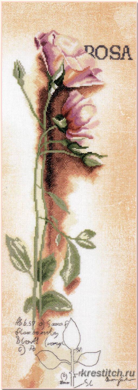 Вышивка роза и ирис